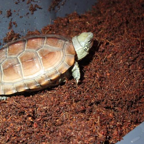 椰砖 椰土 可用于爬宠垫材 养花、种菜