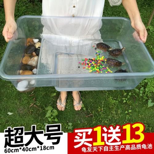 龟友天下新型生态龟缸龟池60cmX40cmX18cm