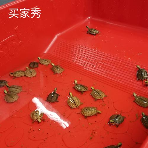 大型豪华生态龟缸