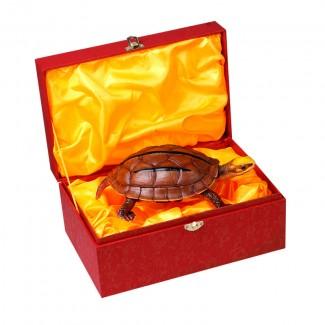 金钱龟模型 1比1仿真制作(22x12.5x7cm)