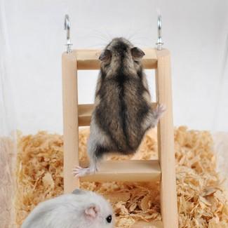 仓鼠木质爬梯仓鼠生活用品木质木制宠物玩具金熊健身玩具小宠用品