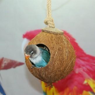 椰壳鸟窝 鹦鹉椰窝 鸟巢 仓鼠 金丝熊小宠吊床窝 鹦鹉用品玩具